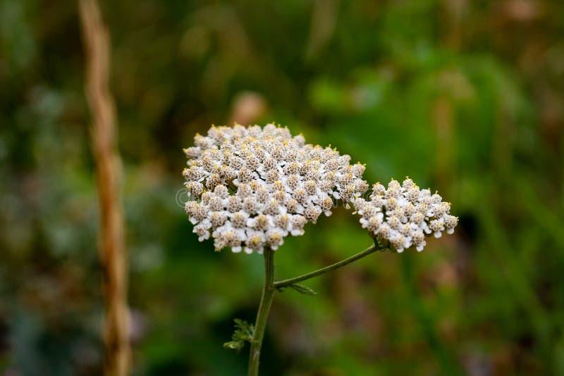 植物或花? 免版税库存照片