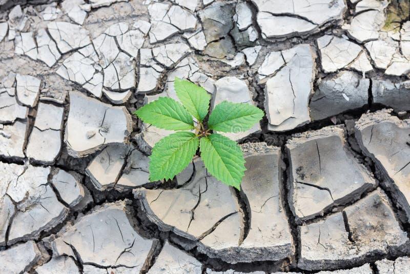 植物断裂通过地面 库存图片