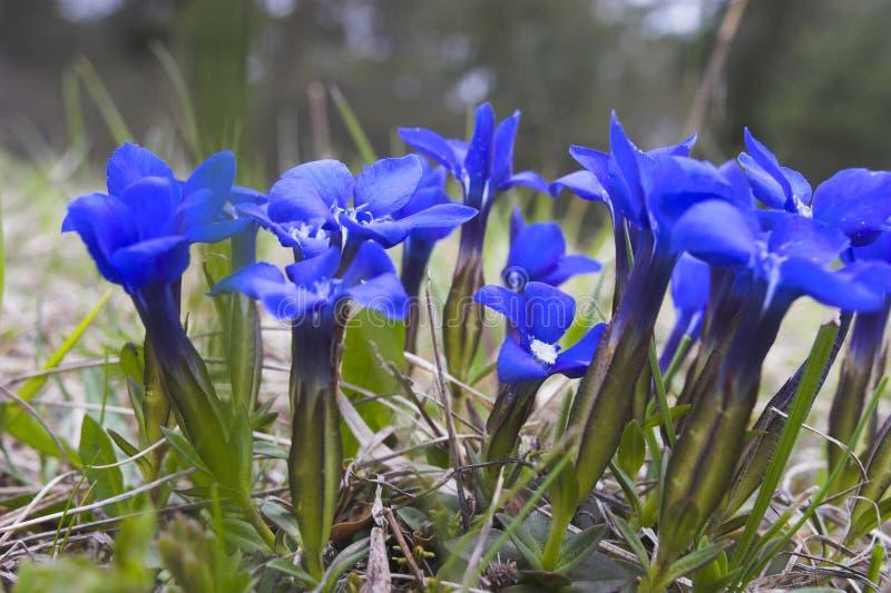植物春天 库存图片