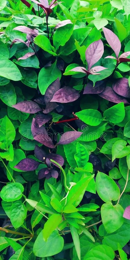植物有最美丽在庭院 图库摄影
