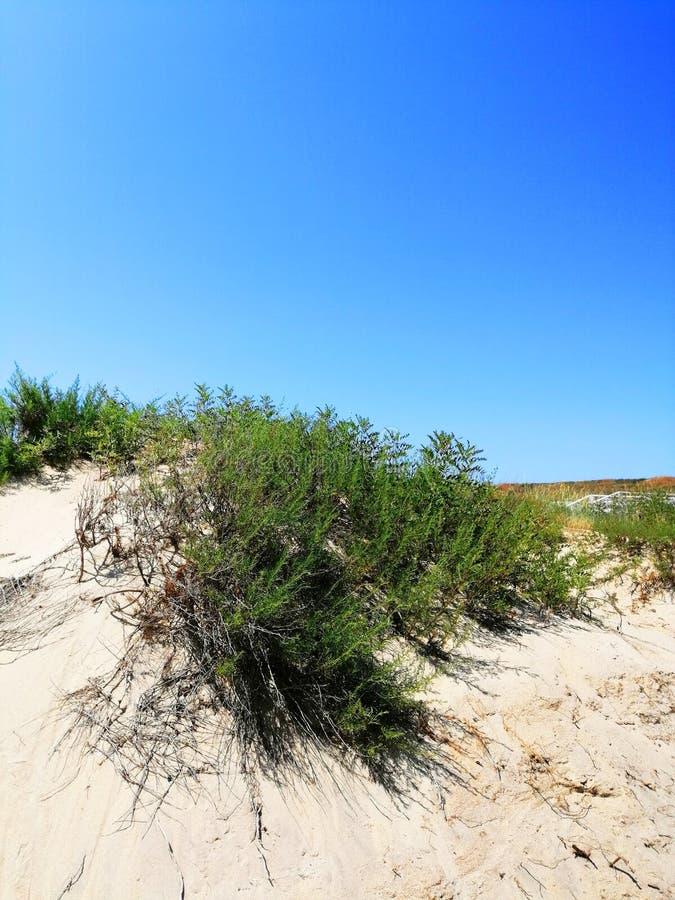 植物沙子的和反对天空 免版税库存图片