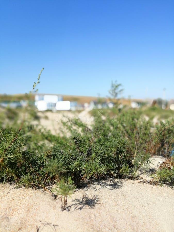 植物沙子的和反对天空 免版税库存照片