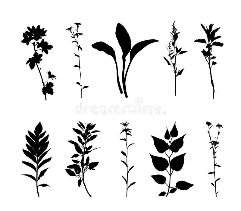 植物现出轮廓在白色背景传染媒介隔绝的集合 皇族释放例证