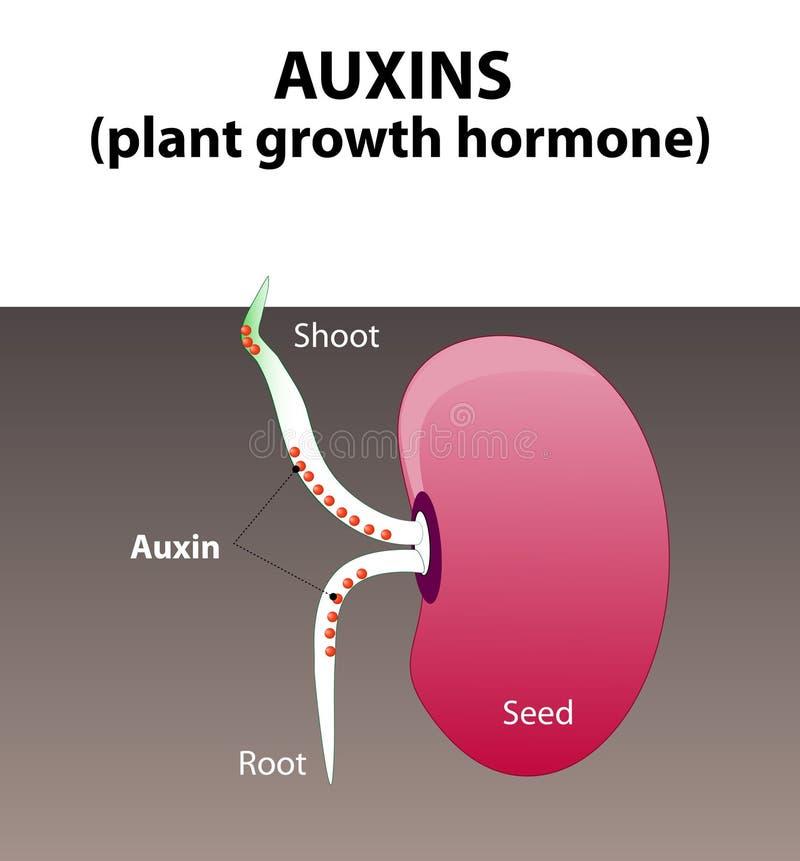 植物生长素 植物激素 皇族释放例证