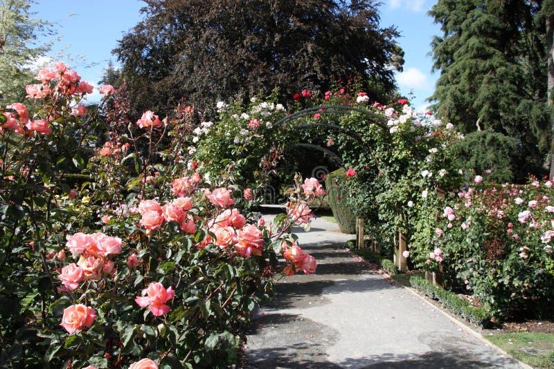 植物的克赖斯特切奇庭院 库存图片