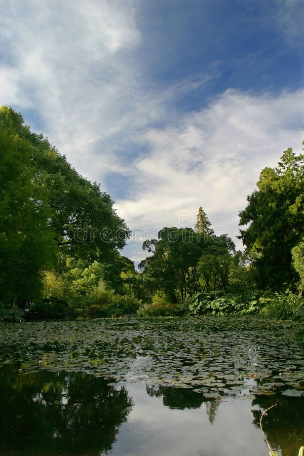 植物的克赖斯特切奇庭院 免版税库存图片