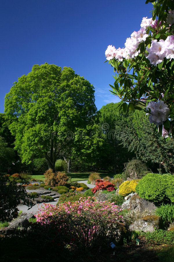 植物的克赖斯特切奇庭院 图库摄影