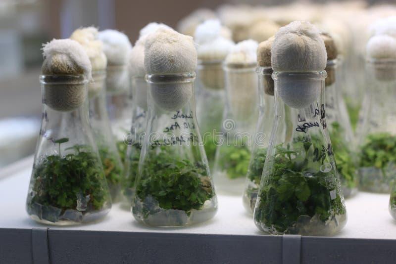 植物的再生产 免版税图库摄影
