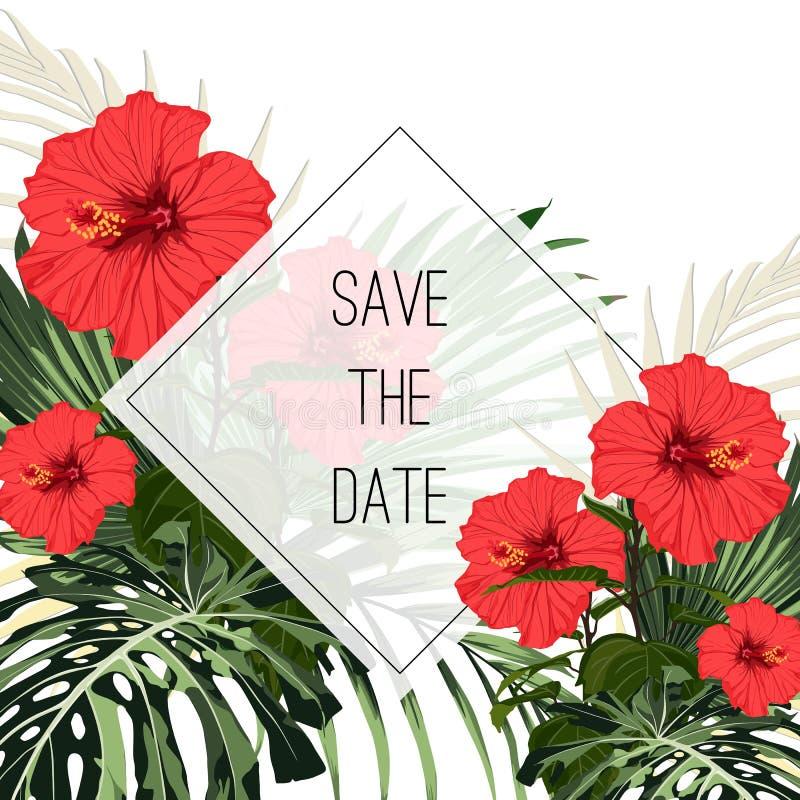 植物的卡片模板,美丽的热带花花束,红色木槿花 向量例证