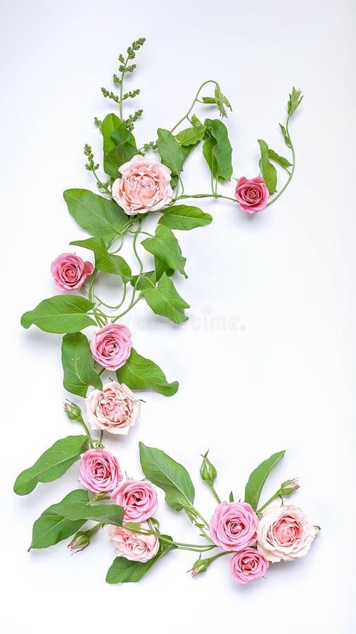 植物的垂直的婚姻的构成:野生植物叶子、花和玫瑰花蕾在白色背景 r 免版税库存图片