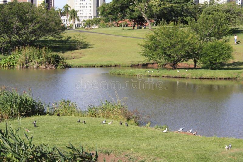 植物的巴西curitiba庭院 免版税库存照片