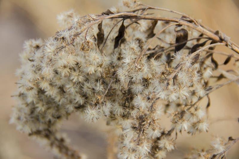 植物的干分支 太阳点燃的干花 r 图库摄影