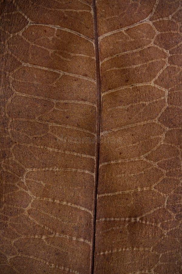 植物的干叶子 库存图片