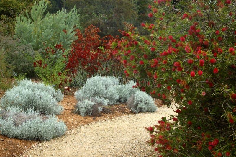 植物的弗朗西斯科庭院圣 库存图片