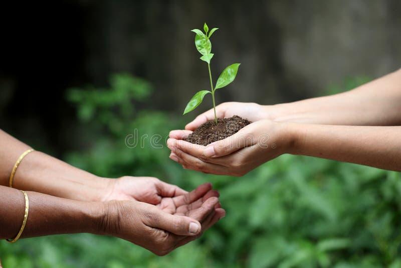 给植物的手 免版税图库摄影