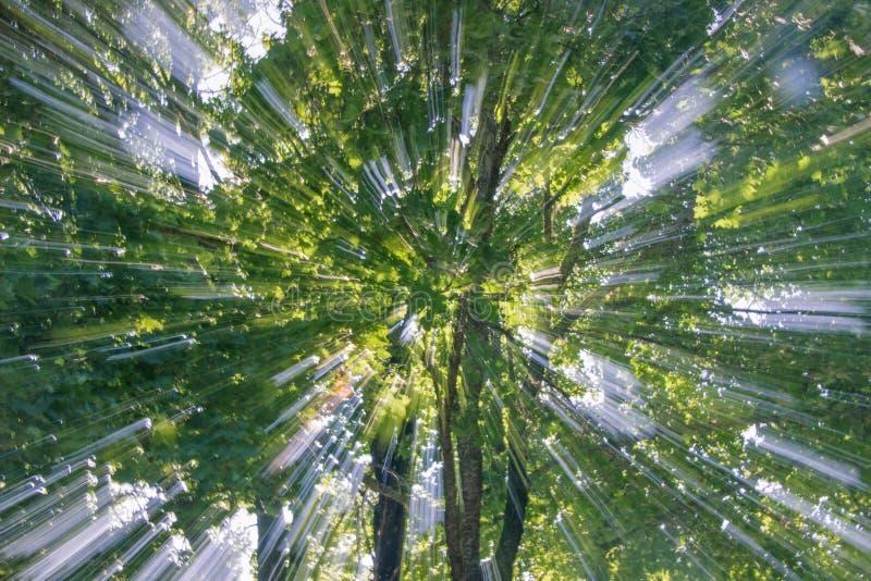 植物的抽象迅速移动的作用 免版税库存照片