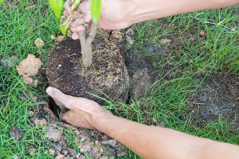 植物的新的生活树 免版税库存照片