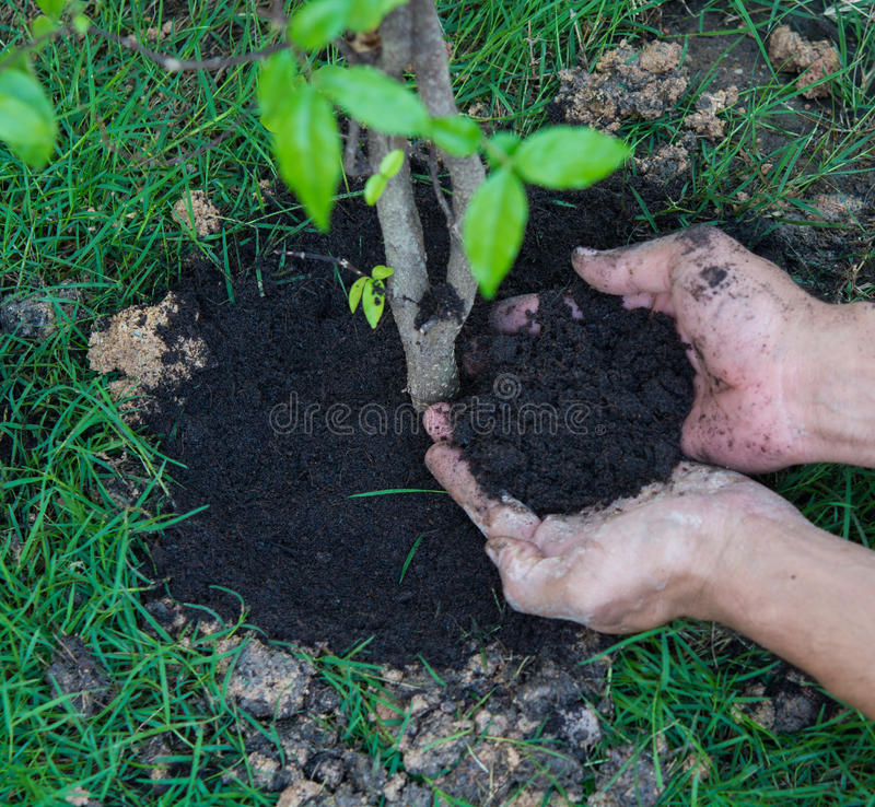 植物的新的生活树 图库摄影