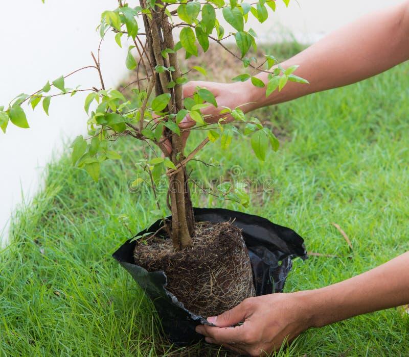 植物的新的生活树 免版税库存图片