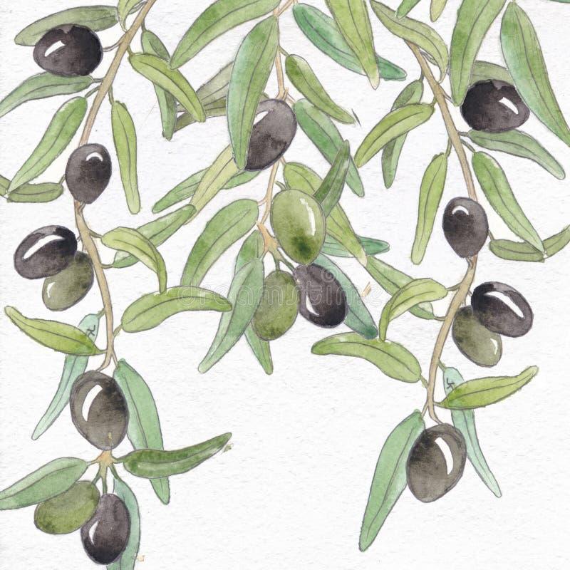 植物的水彩,橄榄色的水彩,植物的橄榄树枝,植物的背景 库存例证