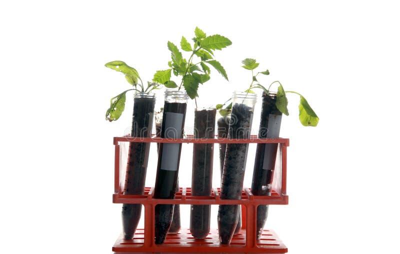 植物的研究 库存照片