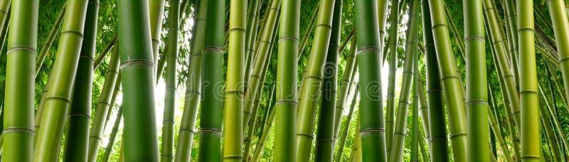 植物的竹密林 免版税库存图片