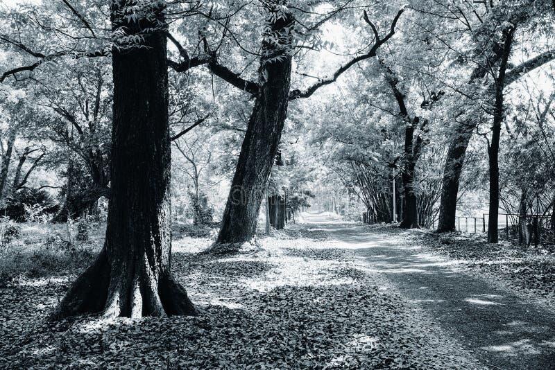 植物的黑白图象 库存照片