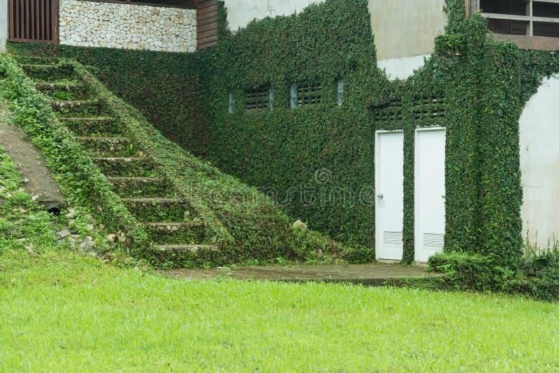 植物盖子房子 库存图片