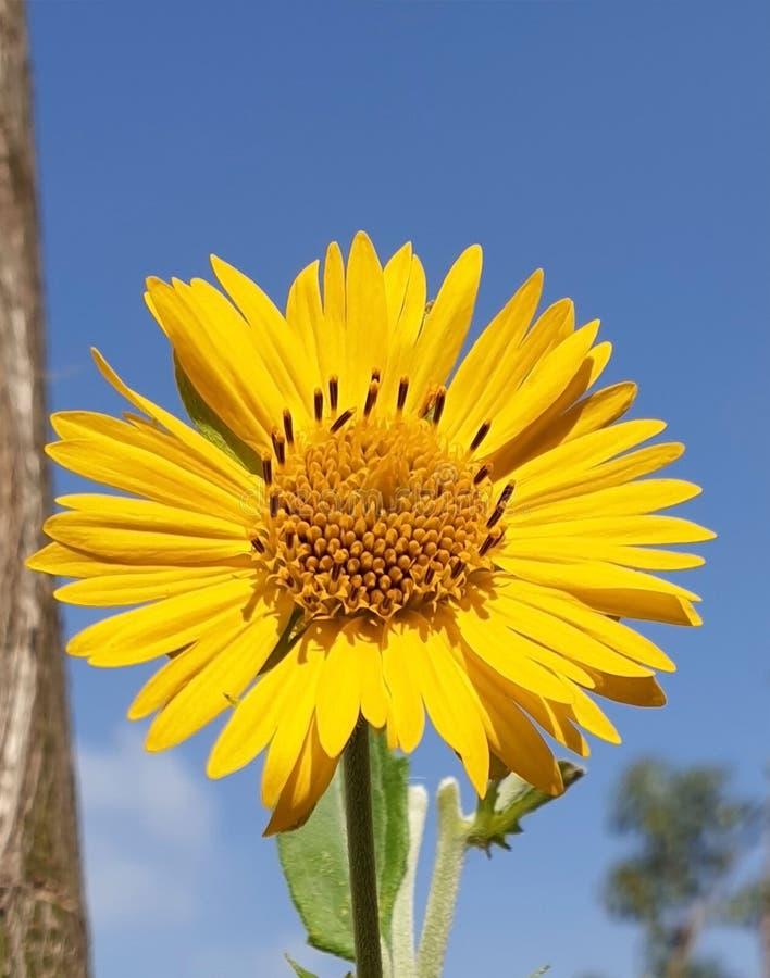 植物相似与向日葵 免版税库存照片