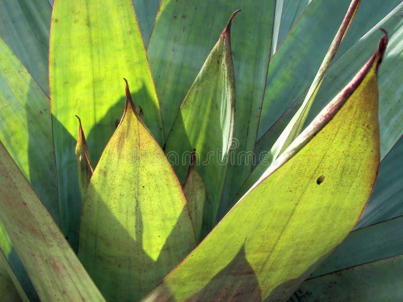 植物群佛罗里达 免版税库存图片
