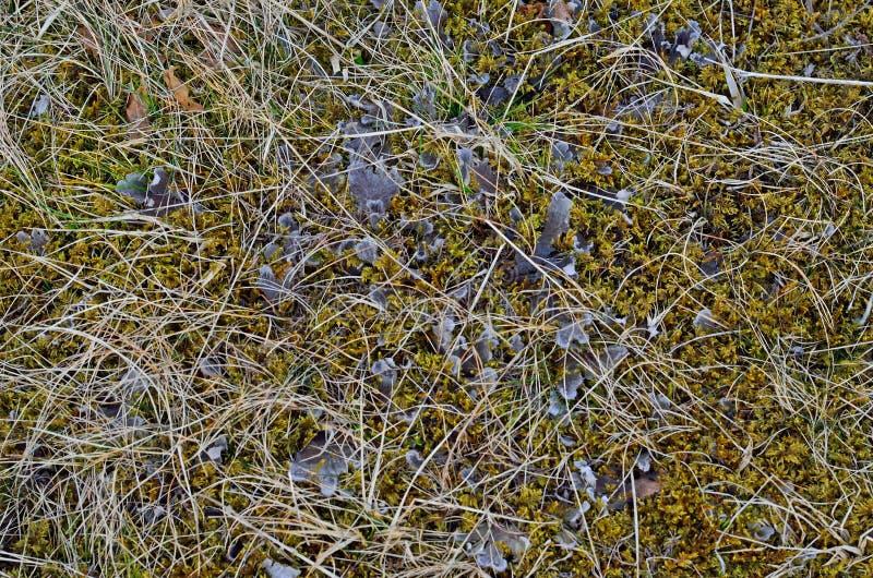 植物群和动物区系在南冰岛 免版税库存照片