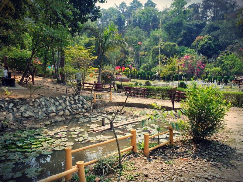 植物群和动物区系在安菲 Awangchein庭院 池塘瓣和莲花是这个地方秀丽  库存图片