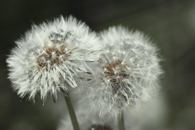 植物群和动物区系的图象在宏指令 免版税库存图片