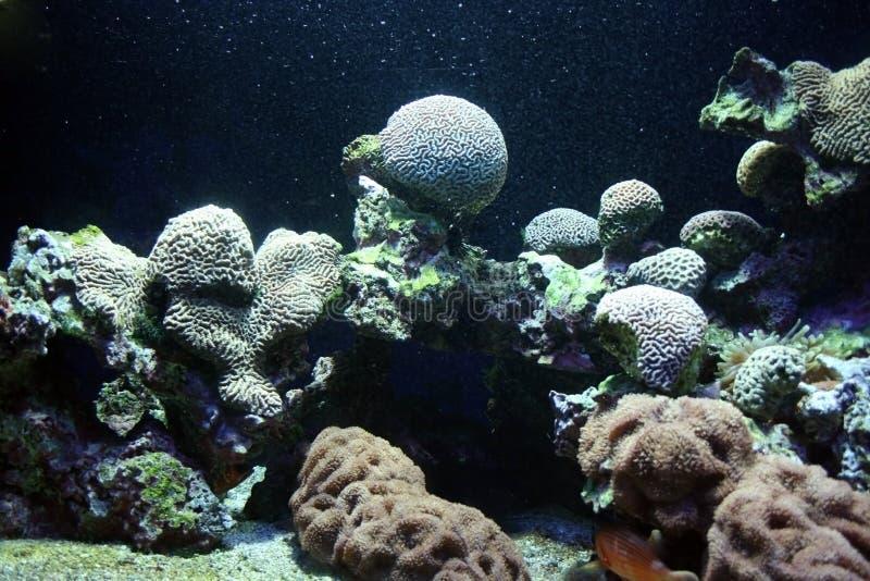 植物群海洋 免版税库存照片