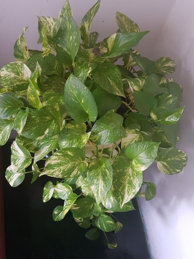 植物群 库存图片