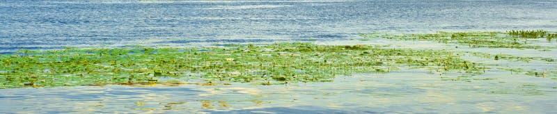 水植物群 库存图片