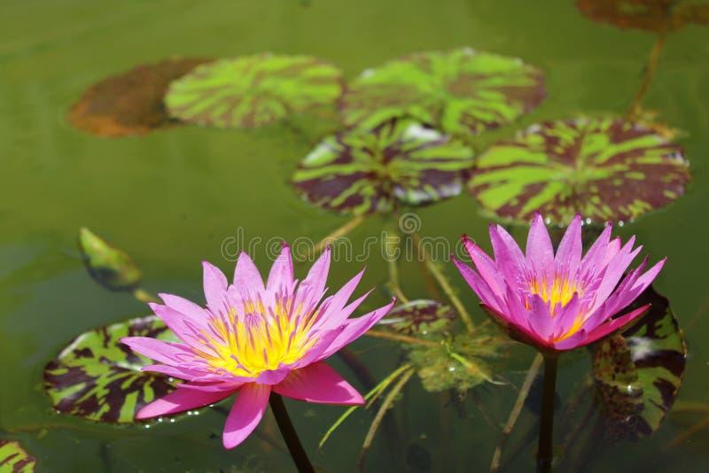 植物群 图库摄影