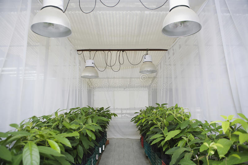 植物自温室 图库摄影