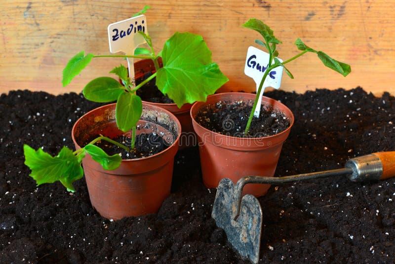 植物花匠 免版税库存图片