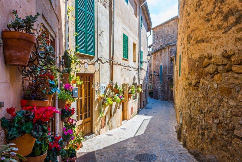 植物街道在Valldemossa,马略卡 库存图片