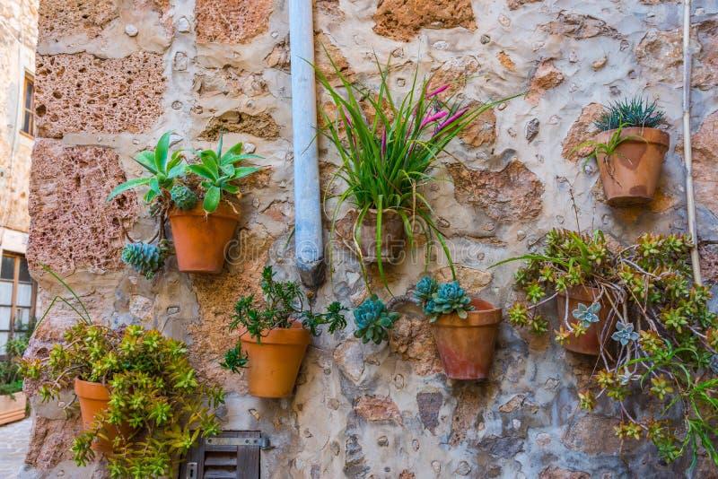 植物街道在Valldemossa,马略卡 免版税库存图片