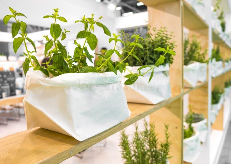 植物袋子搁置香料薄荷的黄麻袋子商店 库存图片