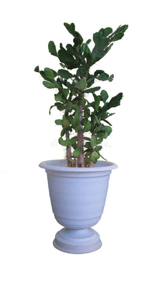 植物装饰物 免版税库存图片