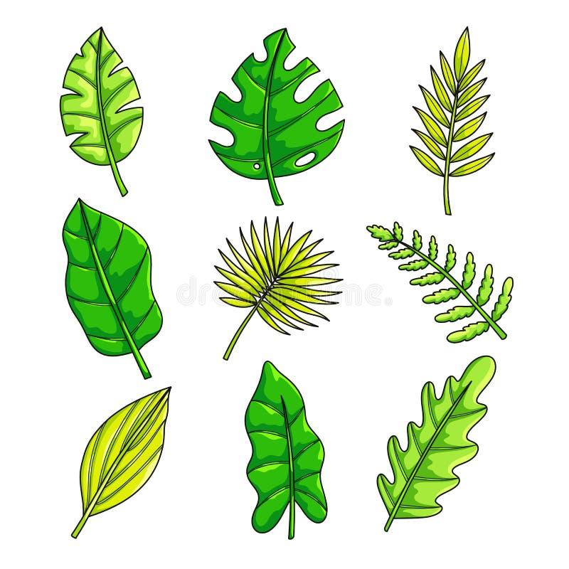 植物设置与热带在白色背景隔绝的收藏新鲜的绿色叶子 向量例证