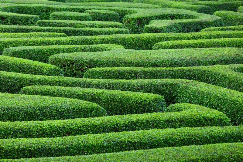 植物迷宫 免版税库存照片