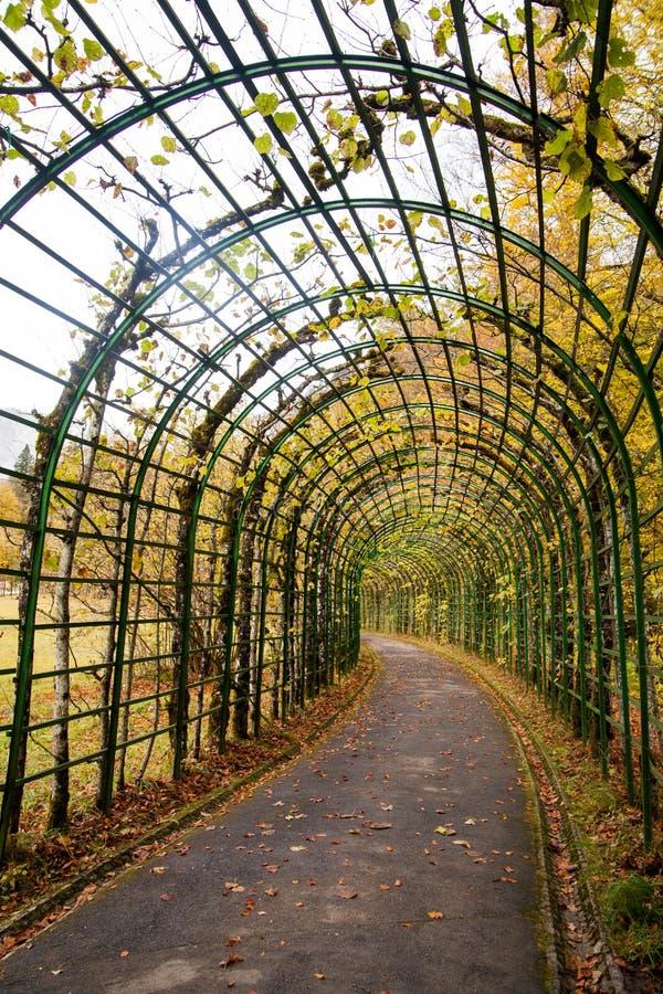 植物隧道  库存照片