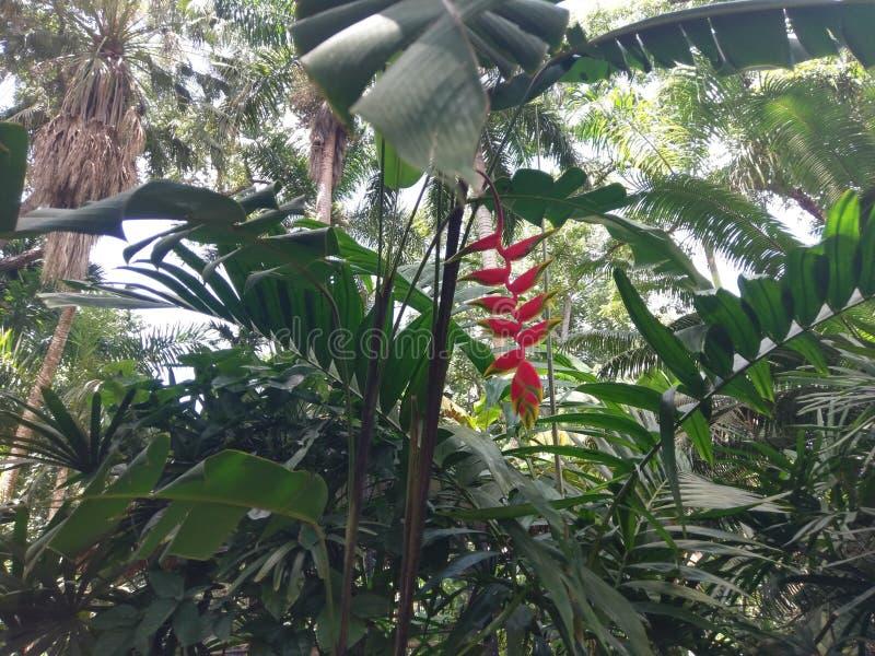 植物,植物群,植被,生态系,叶子,树, arecales 免版税库存照片