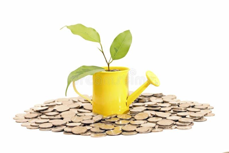 植物从喷壶增长。储款想法  库存照片