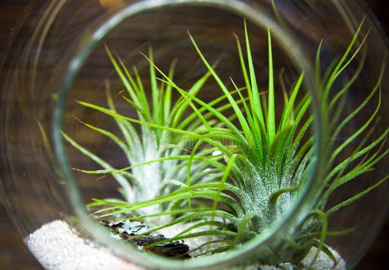 植物玻璃容器 库存图片