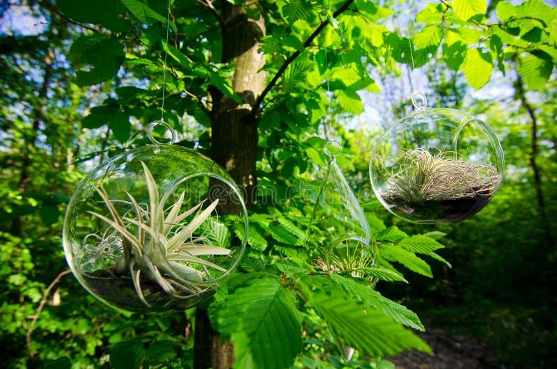 植物玻璃容器 库存照片